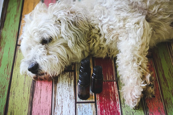 ESSENTIAL OILS FOR DOGS via Weed 'em & Reap