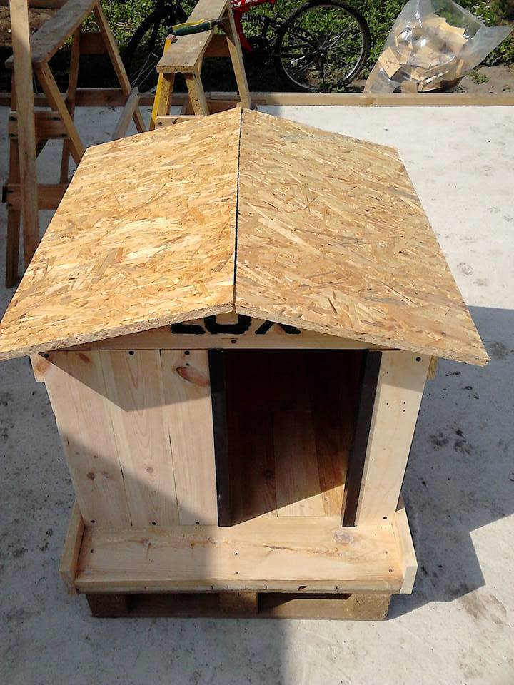 How To Build A Pallet Dog House In A Perfect Manner? Ideas For Dog House Designs on luxury homes for dogs, interior design for dogs, architecture for dogs, garage for dogs, painting for dogs, furniture for dogs, swimming pool for dogs, beach house for dogs, dream house for dogs,